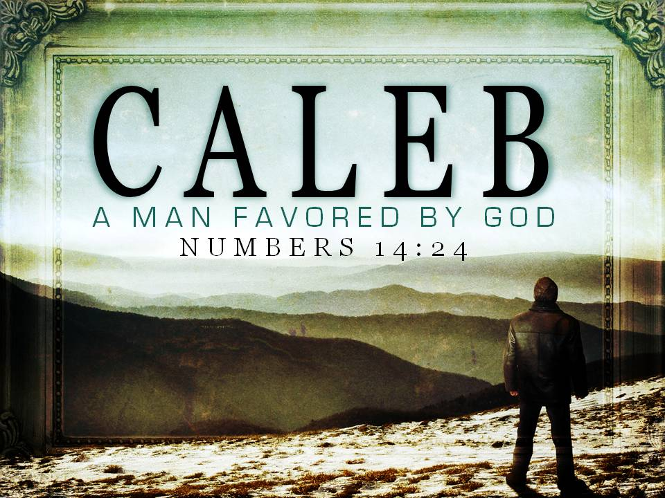 Compare Translations for Numbers 14:24
